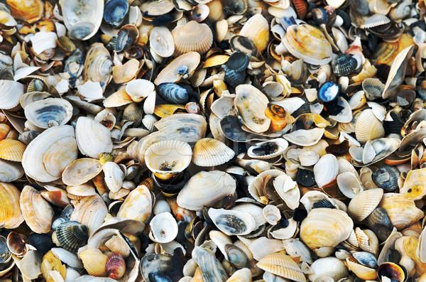 Variedade mar conchas praia ver fundo Foto stock © razvanphotos