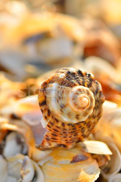 Plaj yaz mavi kum dinlenmek Stok fotoğraf © razvanphotos
