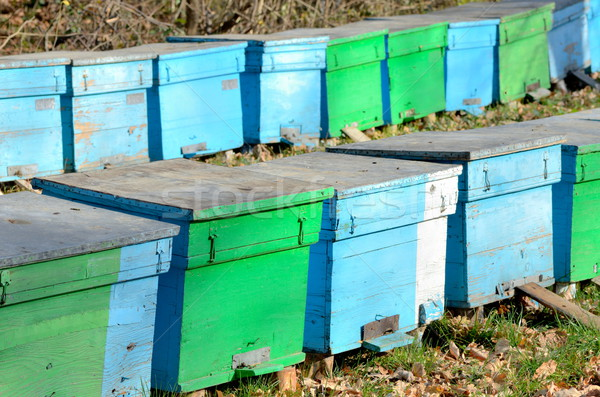 several bee houses in autumn Stock photo © razvanphotos