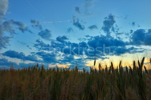 Paisagem ensolarado madrugada campo céu árvore Foto stock © razvanphotos