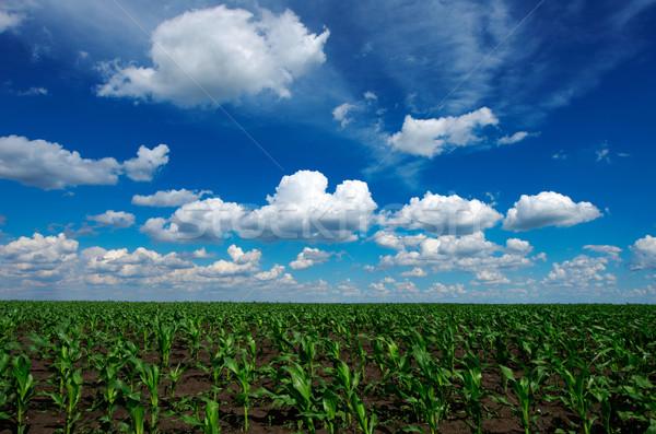 green meadow with cloudy sky Stock photo © razvanphotos