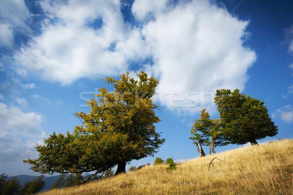 árvores colina verão nuvens primavera grama Foto stock © razvanphotos