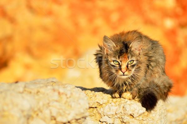 猫 赤ちゃん 白 動物 子猫 美しい ストックフォト © razvanphotos