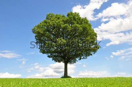 Landscape scenery with solitary tree Stock photo © rbiedermann
