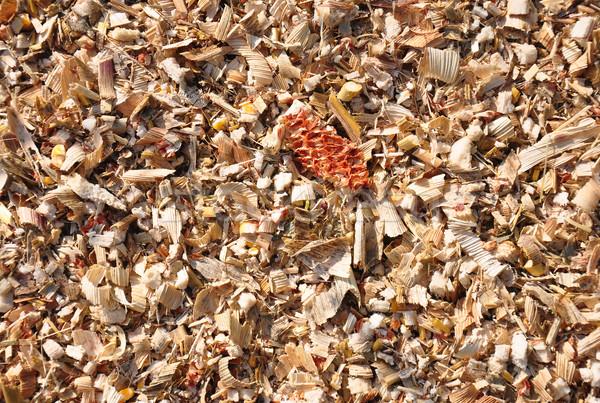 Mısır atık bitkiler Stok fotoğraf © rbiedermann
