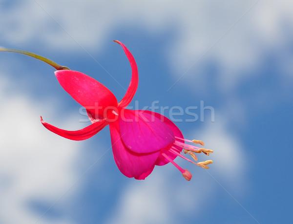 Stok fotoğraf: çiçek · bulutlar · makro · mor · dekorasyon
