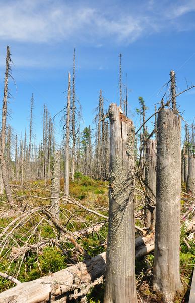 Сток-фото: мертвых · древесины · парка · лес