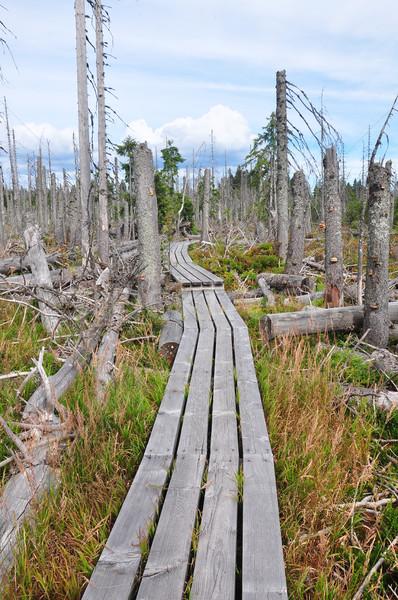 Morti legno parco foresta panorama alberi Foto d'archivio © rbiedermann
