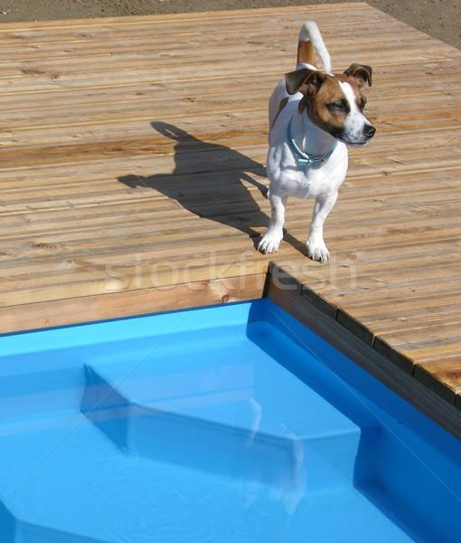 Cão relaxante piscina sol água Foto stock © rbiedermann