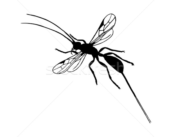 Wesp silhouet dier antenne biologie illustratie Stockfoto © rbiedermann