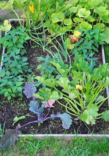 смешанный зеленый кровать завода растений почвы Сток-фото © rbiedermann