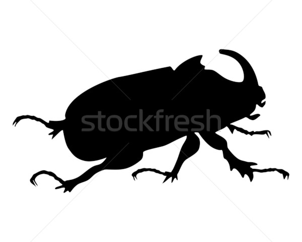 Rhinoceros beetle Stock photo © rbiedermann