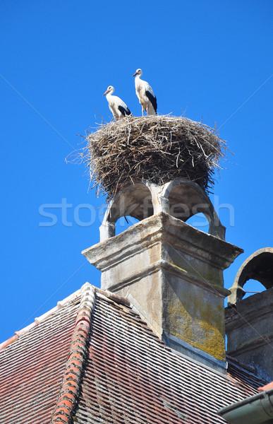 Yuva doğa kuşlar vadi leylek turizm Stok fotoğraf © rbiedermann