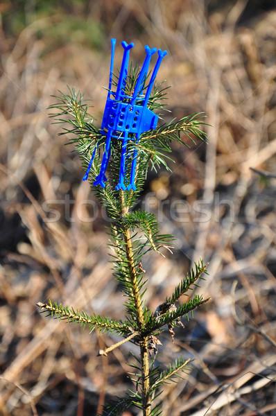 защиту повреждение игры животные дерево древесины Сток-фото © rbiedermann
