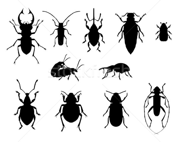 Collection of beetles Stock photo © rbiedermann