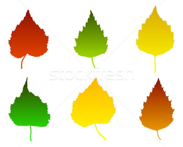 береза листьев зеленый красный осень осень Сток-фото © rbiedermann