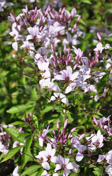 Stock fotó: Pók · virág · kert · növény