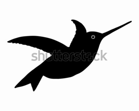 Hummingbird Stock photo © rbiedermann