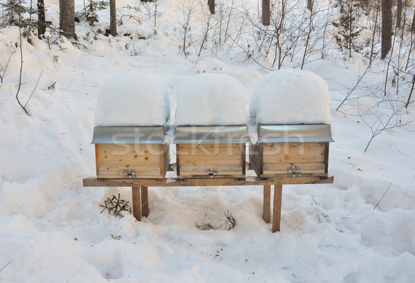 Bee hives in winter Stock photo © rbiedermann