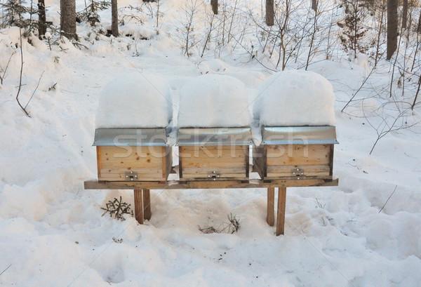 Albină iarnă pădure zăpadă cutie rece Imagine de stoc © rbiedermann