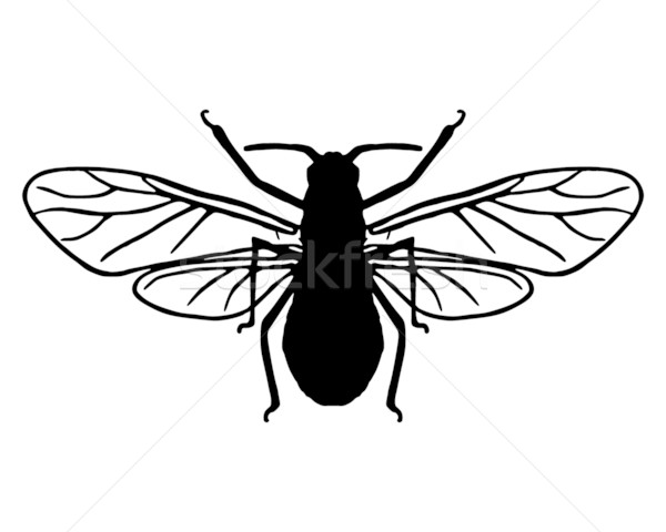 Aphid silhouette Stock photo © rbiedermann