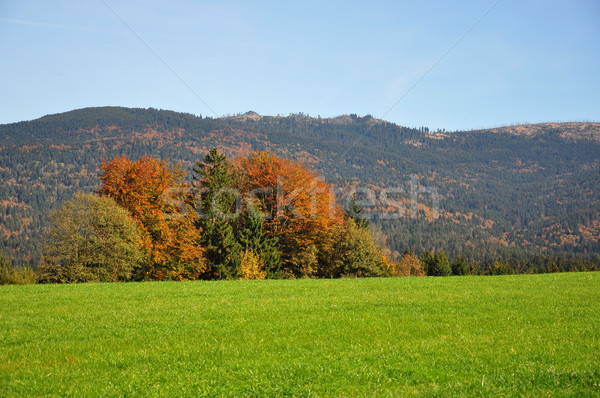 Mountain Dreisessel, Bavaria Stock photo © rbiedermann