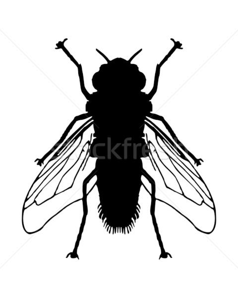 Uçmak siyah böcek kanat biyoloji yalıtılmış Stok fotoğraf © rbiedermann