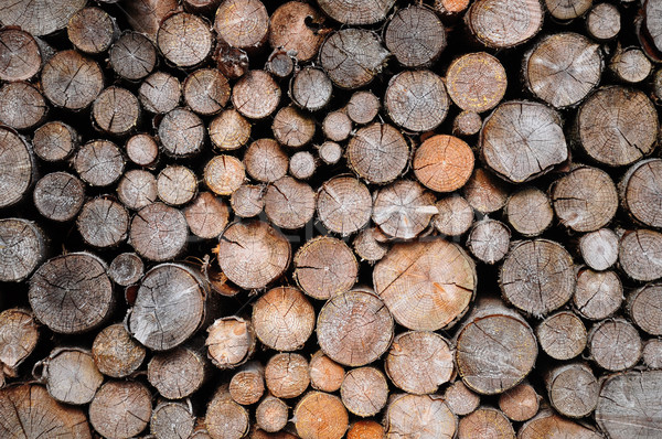 Köteg lucfenyő fa erdő háttér Buenos Aires Stock fotó © rbiedermann