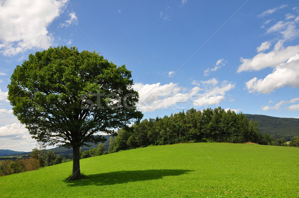 Solitary tree Stock photo © rbiedermann