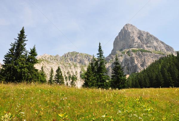 Autriche arbres été domaine bleu Voyage Photo stock © rbiedermann
