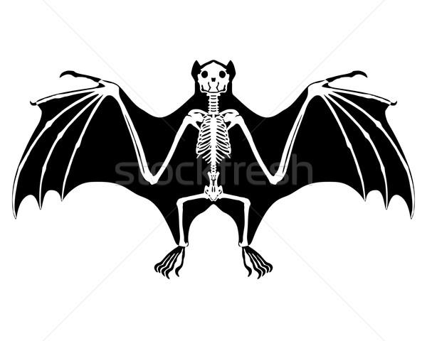 商业照片: 蝙蝠 · 骨架 · 性质 · 黑色 · 翅膀 ·翼