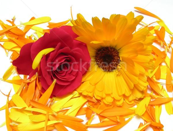 Calendula and rose flower on petals Stock photo © rbiedermann