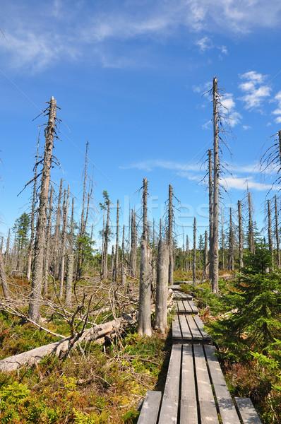 Сток-фото: мертвых · древесины · парка · лес · пейзаж · деревья