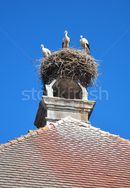 Storks nest in Ornbau, Bavaria Stock photo © rbiedermann