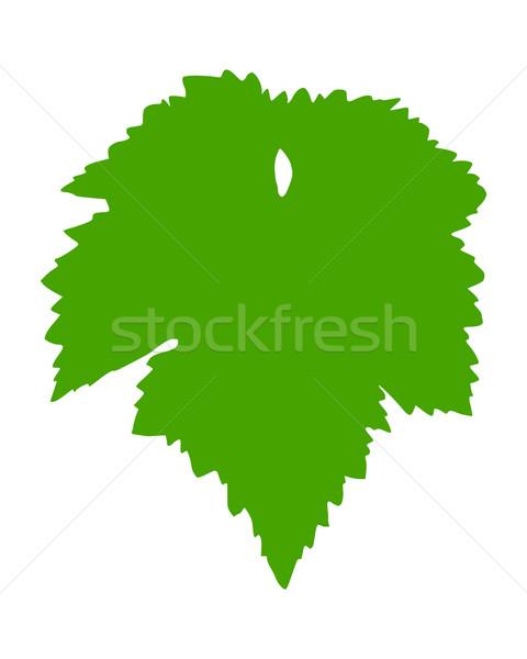 Vid hoja verde otono de uva Foto stock © rbiedermann