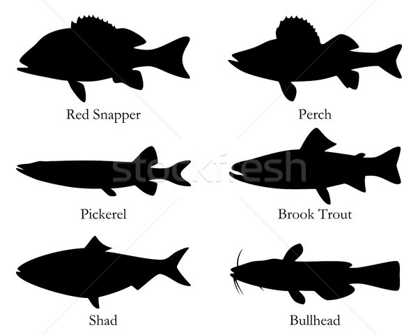 North American food fish Stock photo © rbiedermann