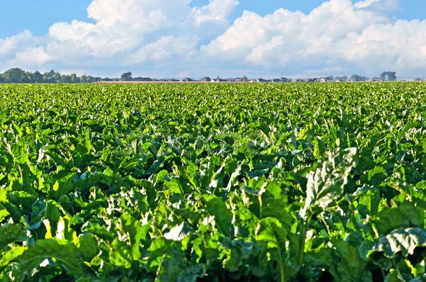 области центральный Колорадо большой сахар сельский Сток-фото © rcarner