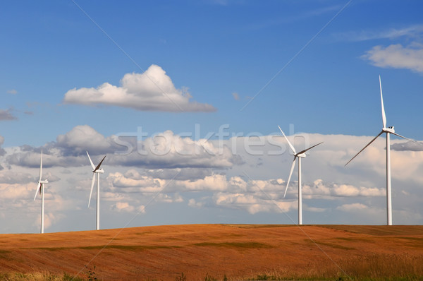 Wind turbines in the grain fields Stock photo © rcarner