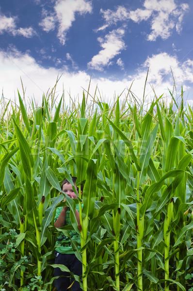 Kukoricamező kicsi fiú aranyos rejtőzködik gyermek Stock fotó © rcarner