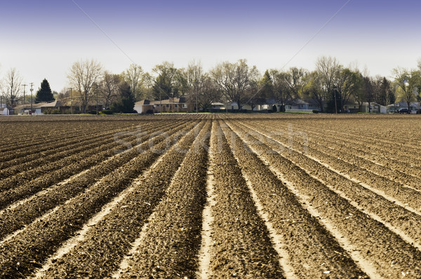 Plowed and Planted Stock photo © rcarner