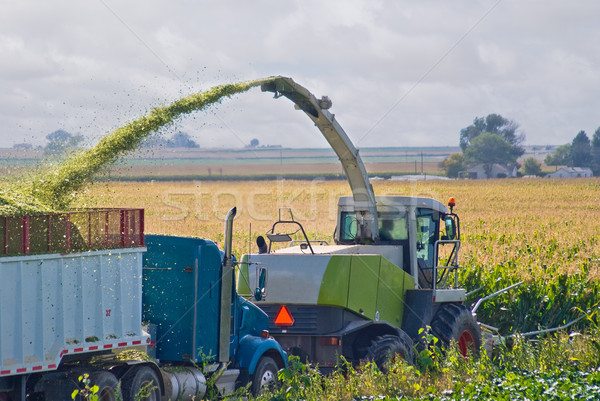 Farmer harvesting corn for silage Stock photo © rcarner