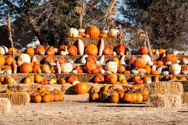 Satış halloween göstermek sonbahar bahçe Stok fotoğraf © rcarner