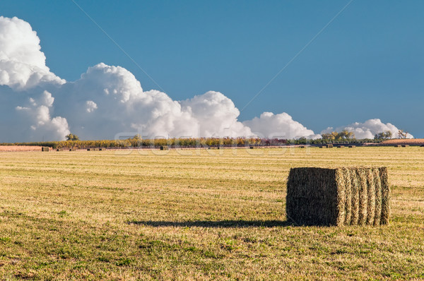 Fardo alfafa palha campo Colorado Foto stock © rcarner