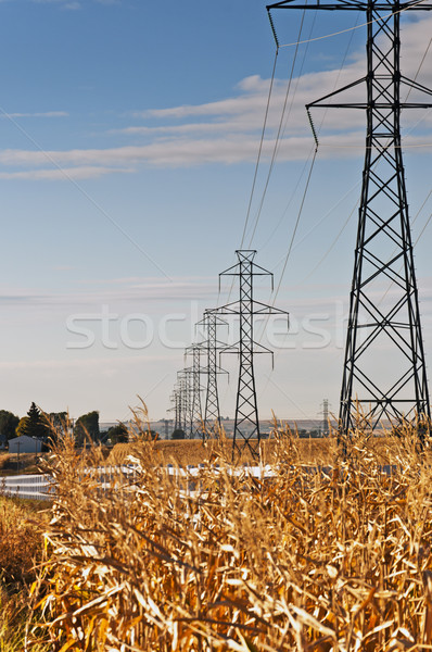 High Power Transmission Lines Stock photo © rcarner
