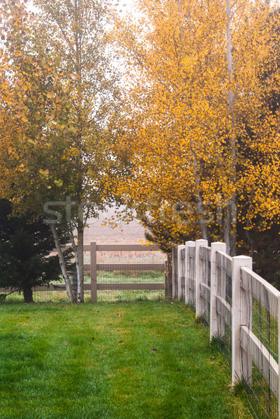 Morning haze in the back yard with autumn colors. Stock photo © rcarner