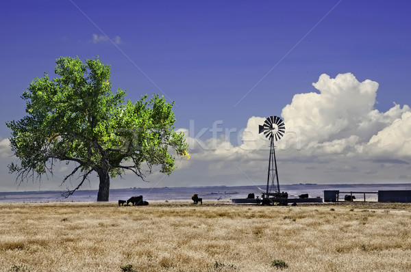 Cattle near a water tank and windmill Stock photo © rcarner