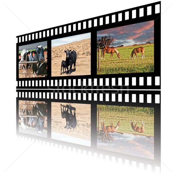 Filmstrip domestico animali della fattoria cavalli carne mucca Foto d'archivio © rcarner