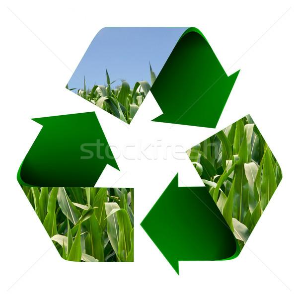 Recycling Symbol Bereich Mais Kornfeld isoliert Stock foto © rcarner