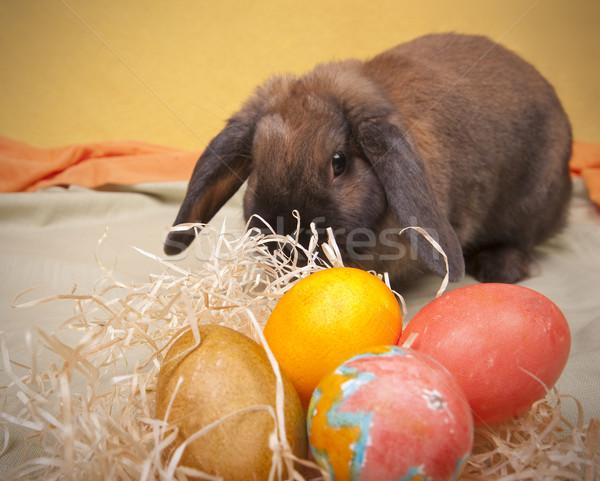 Wielkanoc dwa strony malowany Easter Eggs pomarańczowy Zdjęcia stock © Reaktori