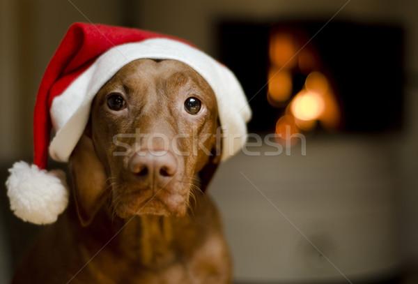 Christmas Dog Stock photo © Reaktori